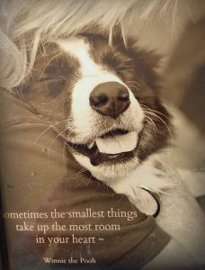 Above & Beyond Dog Rehabilitation The Smallest Things Your Relationship With Your Dog
