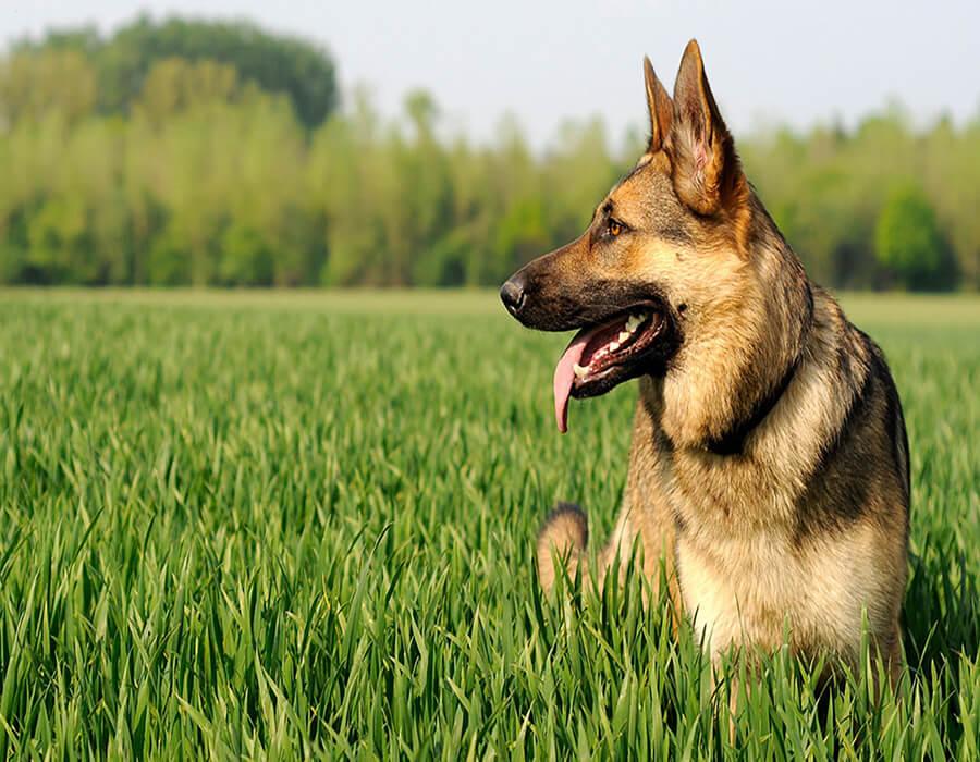 Above & Beyond Dog Training & Rehabilitation Live-in Training