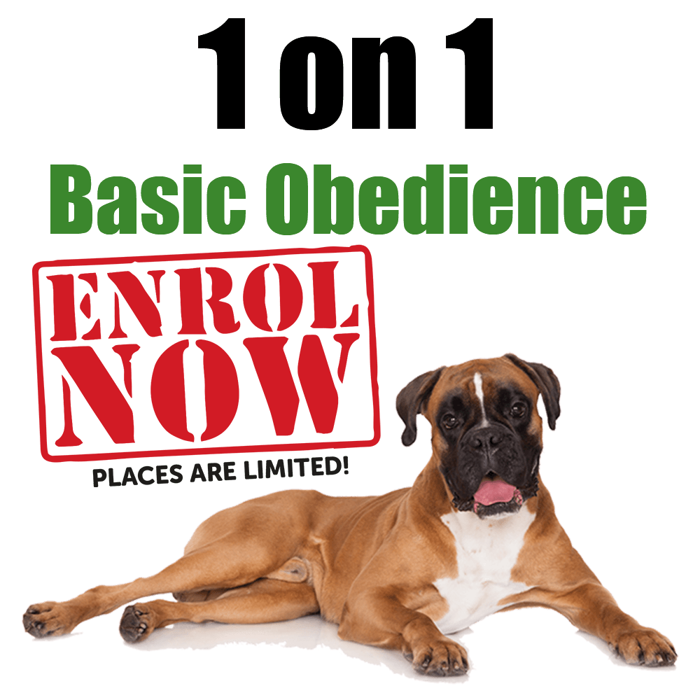 Above & Beyond Dog Training & Rehabilitation - 1on1-basic-obedience-cathy-grant