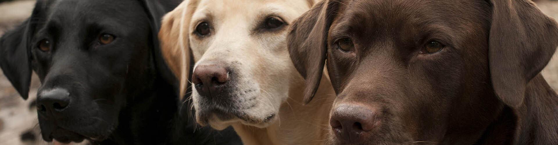 Above & Beyond Dog Training & Rehabilitation Dog Behaviour Specialist Brisbane