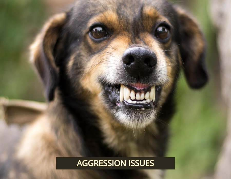 Above & Beyond Dog Training & Rehabilitation Aggression Problems Solved Cathy Grant NDTF