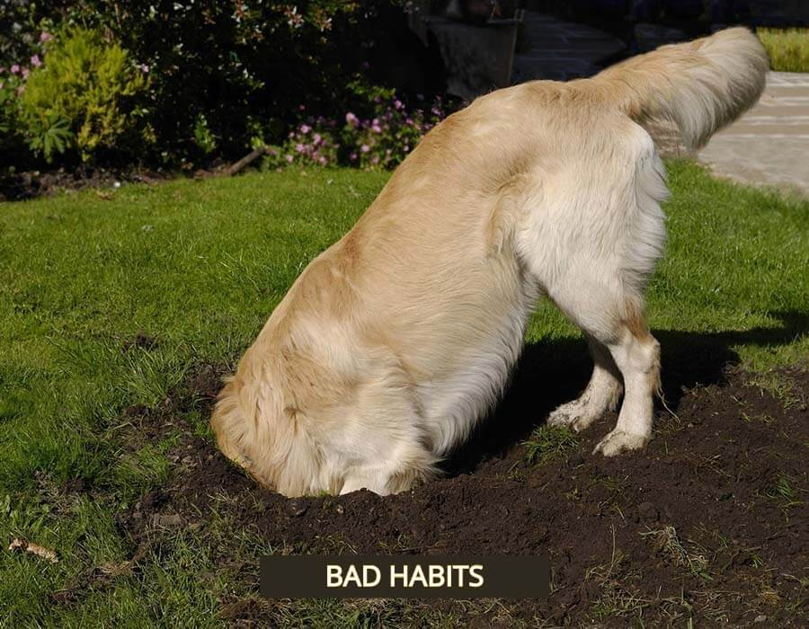 Above & Beyond Dog Training & Rehabilitation Digging & Behaviour Problems Fixed Cathy Grant NDTF
