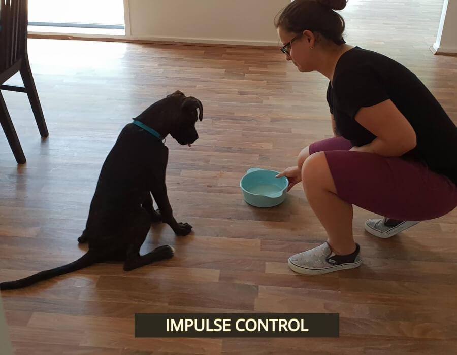 Above & Beyond Dog Training & Rehabilitation Impulse Training