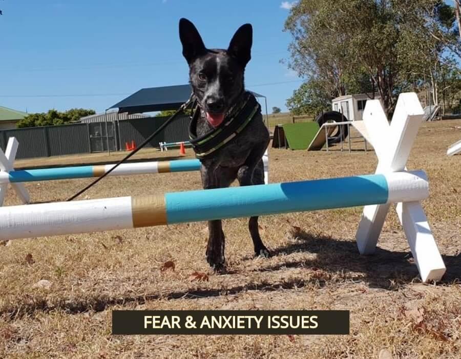 Above & Beyond Dog Training & Rehabilitation Millie Fear & Anxiety Rehabilitation