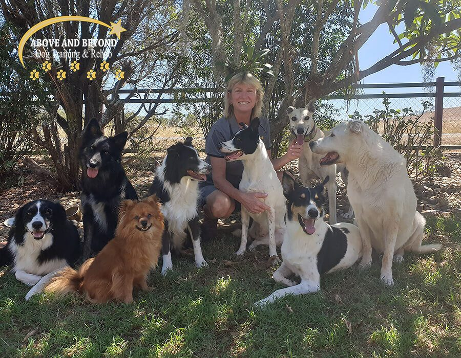 Above & Beyond Dog Training & Rehabilitation Cathy Grant Dog Trainer Tarampa Gold Coast Brisbane