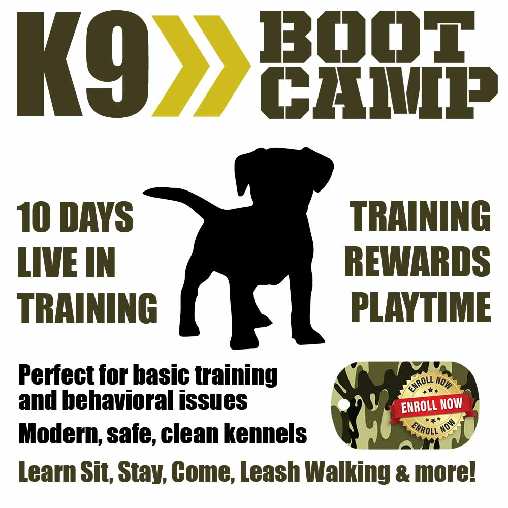 Above & Beyond Dog Training & Rehabilitation K9 Boot Camp